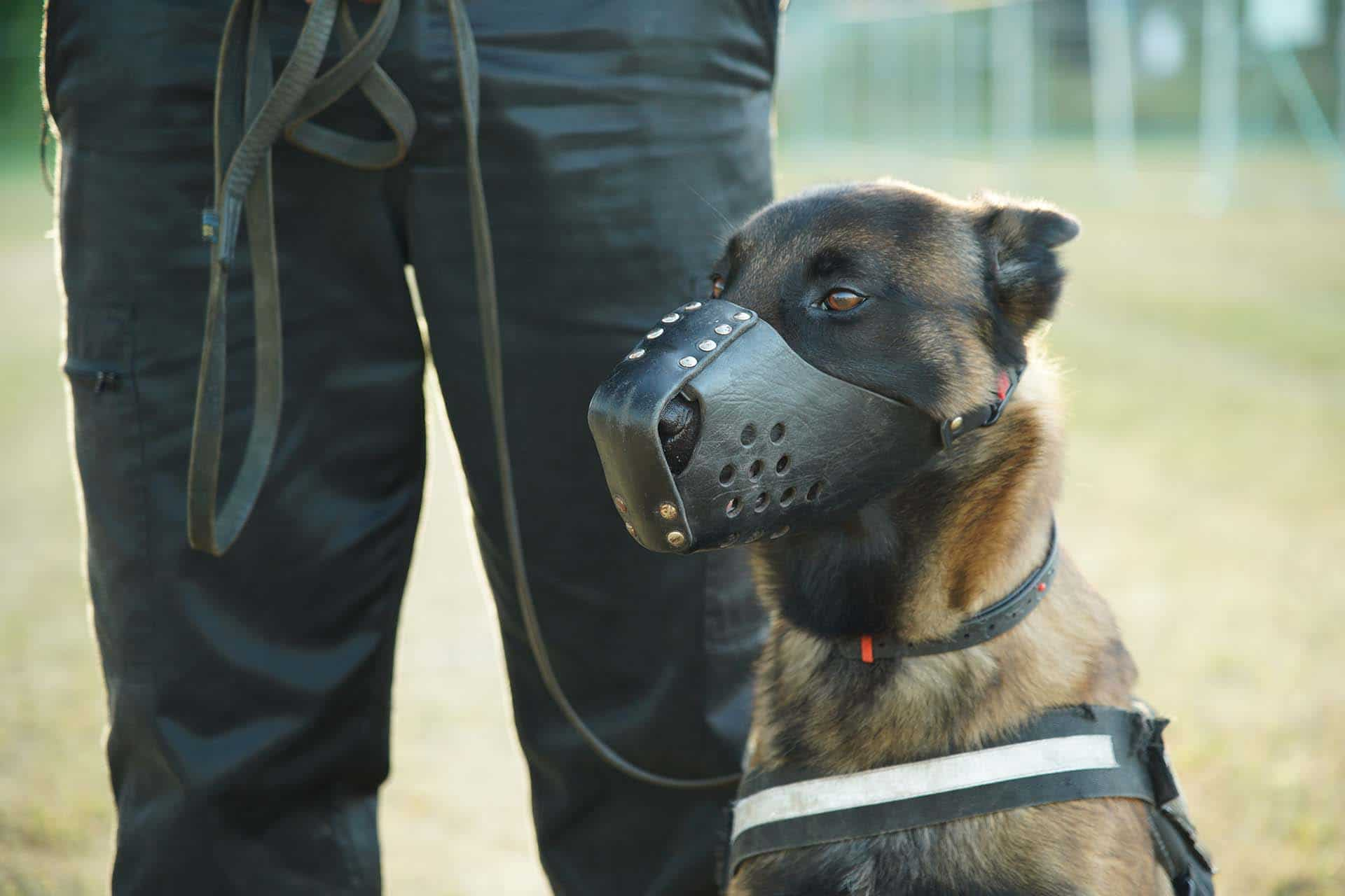 agent-cynophile-chien-universal-security-normandie