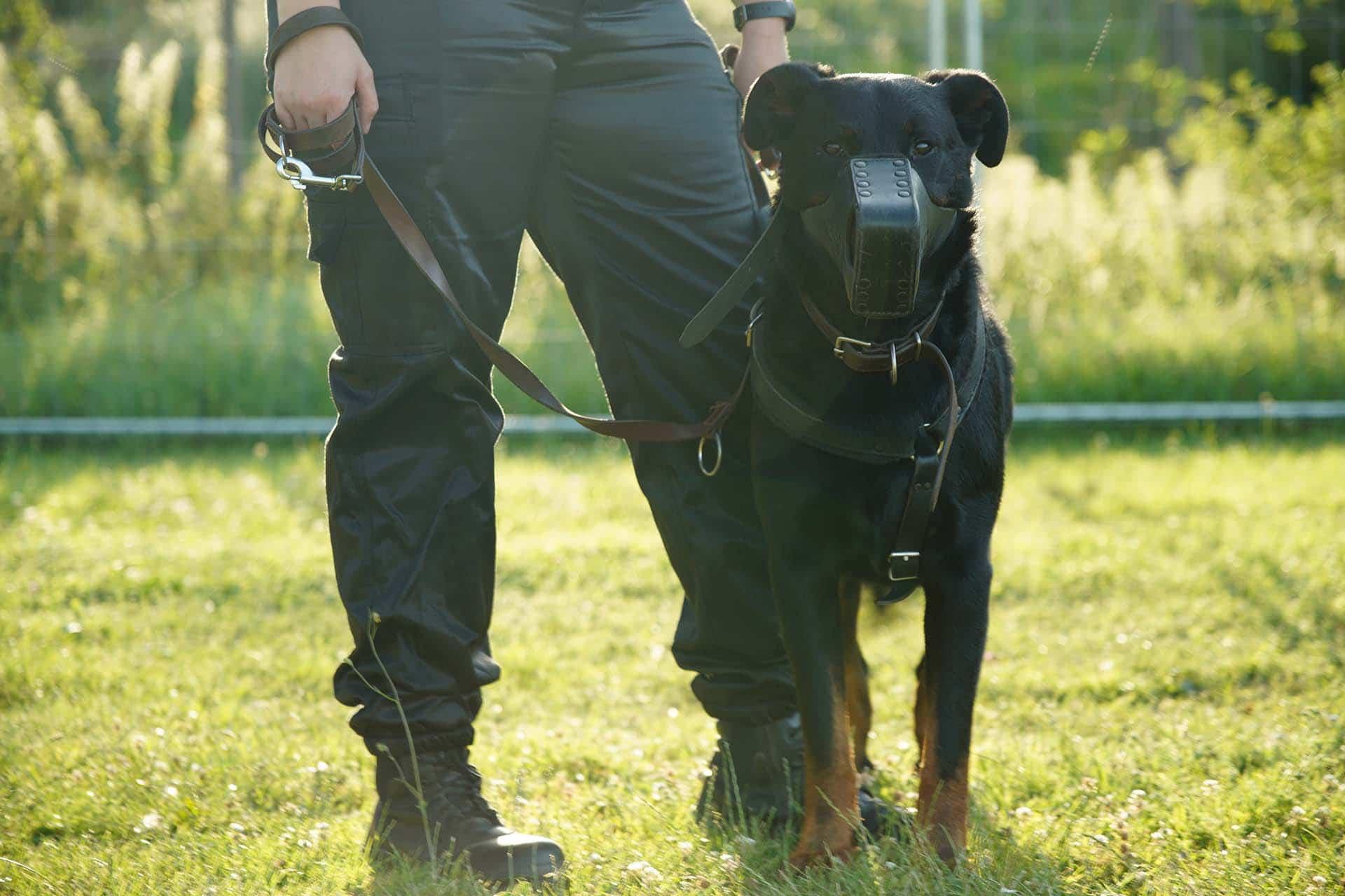 agent-cynophile-chien-universal-normandie